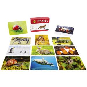 karty obrazkowe - zwierzęta - zestaw