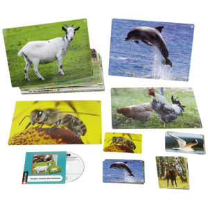 karty obrazkowe i dźwięki zwierząt - zestaw